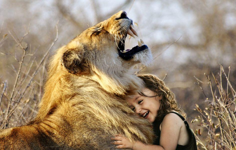 lion 3012515 1920a